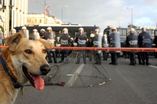 riot-dog-w500